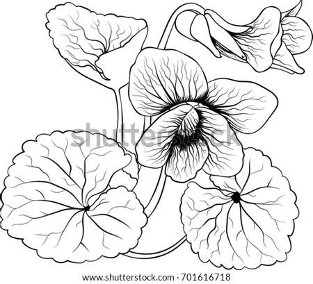 Three Hibiscus Flower Silhouettes Design Vector Stock