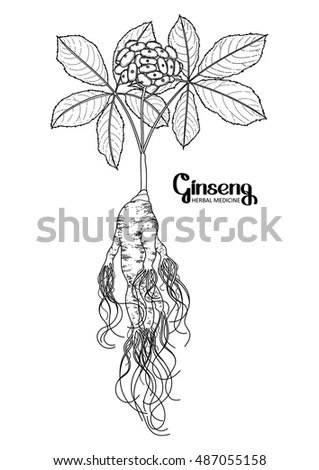 Root Outline Stock Photos, Royalty-Free Images & Vectors