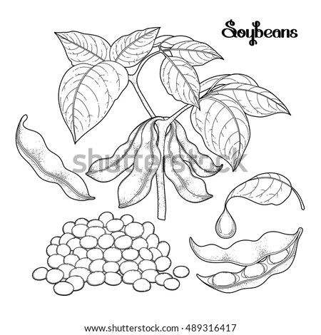 Soybean Stock Images, Royalty-Free Images & Vectors