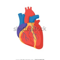 Vintage Red Real Heart Diagram Mobile Home Ligurien Human Stock Images, Royalty-free Images & Vectors | Shutterstock