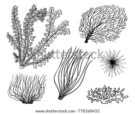 Kelp Silhouette Stock Images, Royalty-Free Images