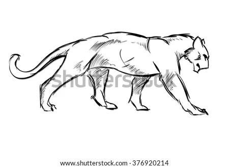 Tiger Eating Meatsketch Illustration Stock Illustration