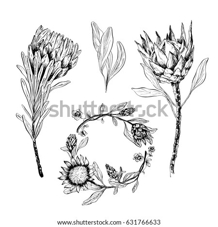 Protea Stock Images, Royalty-Free Images & Vectors