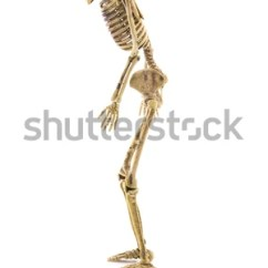 Rib Cage Bone Diagram Schneider Mccb Shunt Trip Wiring Side View Illustration Human Skeletal Anatomy Stock 87811369 - Shutterstock