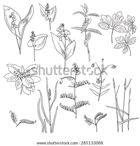 Loosestrife Stock Photos, Royalty-Free Images & Vectors