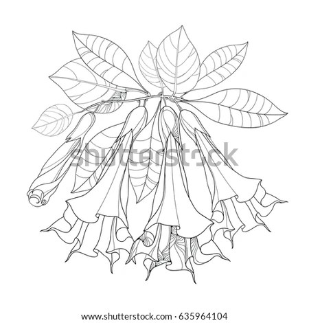 Bougainvillea Drawing Sketch Coloring Page