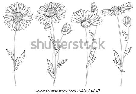 Floral Set Stock Images, Royalty-Free Images & Vectors
