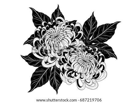 Chrysanthemum Vector On White Background Chrysanthemum