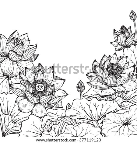 lotus in water plant diagram kenmore elite parts beautiful monochrome vector floral frame stock 377119120 - shutterstock
