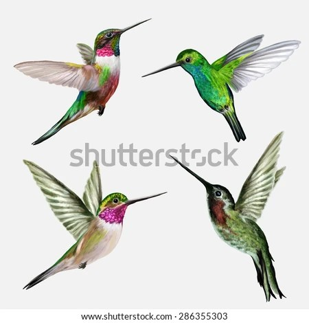 hummingbird stock royalty-free