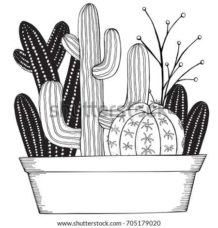 Hand Drawn Set Succulents Cacti Pots Stock Vector