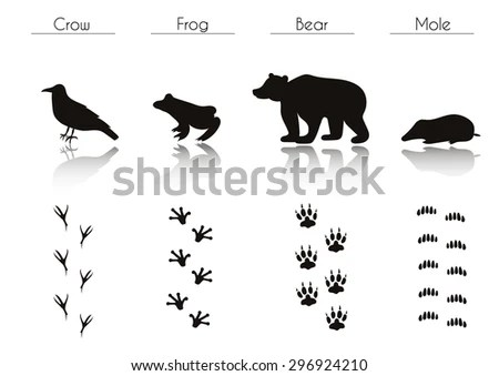 Bear Tracks Stock Images, Royalty-Free Images & Vectors