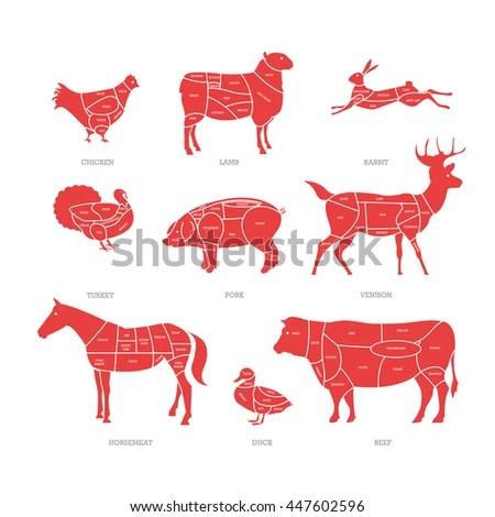 pork butcher cuts diagram whirlpool duet electric dryer wiring shop concept vector illustration meat stock 447602596 - shutterstock