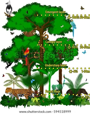 diagram of a tropical forest 2001 chevy malibu ls stereo wiring green anaconda toyskids co images gallery