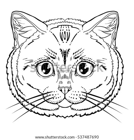 Cat Head Stock Images, Royalty-Free Images & Vectors