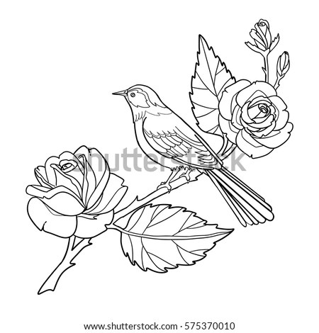 Vector Rose Outline Sketch Coloring Page