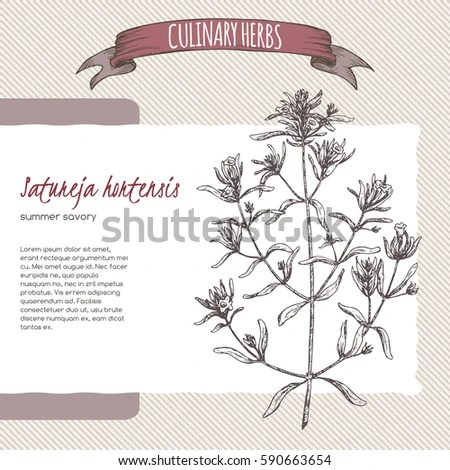 Hortensis Stock Images RoyaltyFree Images Vectors
