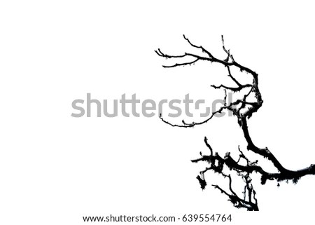 Leafless Stock Images, Royalty-Free Images & Vectors