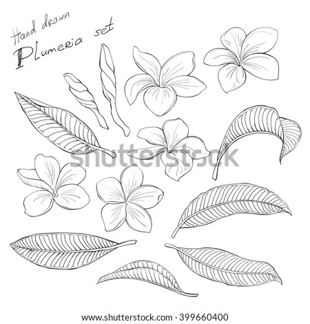 Plumeria Stock Images, Royalty-Free Images & Vectors