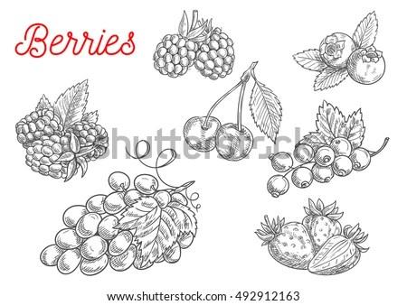Blackberries in june essay outline