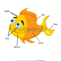 Shark Internal Organs Diagram Wiring For Solar Battery Charger Panel Series Box Fish Anatomy Stock Images, Royalty-free Images & Vectors | Shutterstock