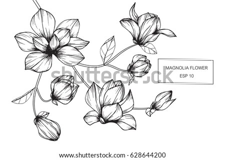 Cherry Blossoms Falling Stylized Wallpaper Flower Line Drawing Stock Images Royalty Free Images