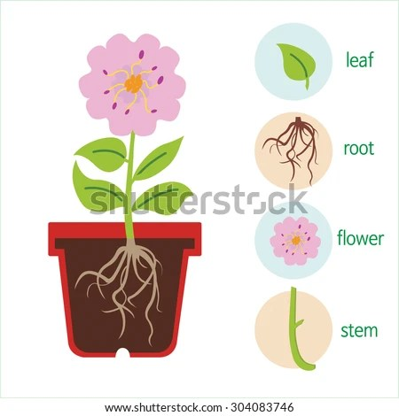 how to do a stem and leaf diagram 1999 ford f350 7 3 wiring plant flower consists roots stock vector 304083746 - shutterstock