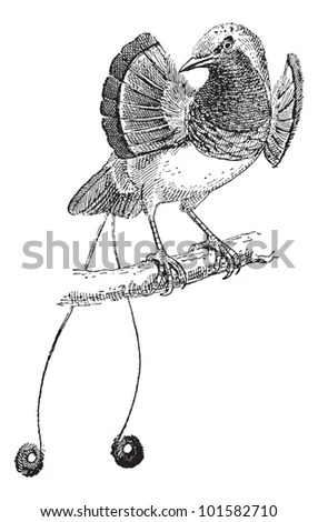 Vintage Birds Drawing Nest Stock Photos, Images