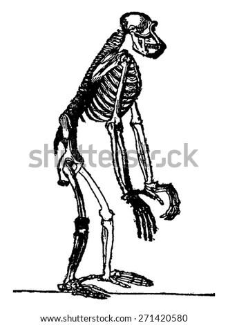 Theory Evolution Manhuman Developmentcromagnon