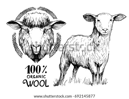 Lamb-of-god Stock Images, Royalty-Free Images & Vectors