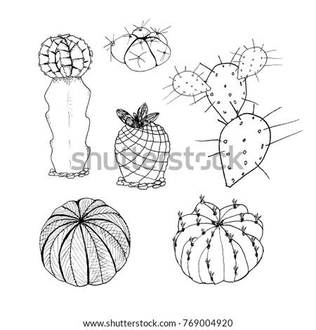 Set Cactus Hand Drawn Botanical Art Stock Illustration