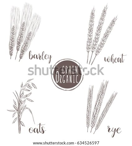 Seed Growing Stock Images, Royalty-Free Images & Vectors