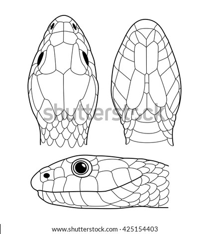 Snake Head Stock Images, Royalty-Free Images & Vectors