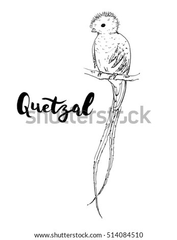 Quetzal Stock Images, Royalty-Free Images & Vectors