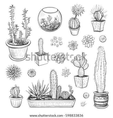 Beautiful Vector Collection Sketches Houseplants Hand