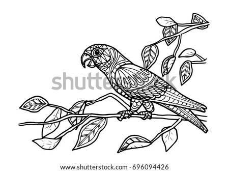 Coloring Page Book Parrot Bird Color Stock Vector