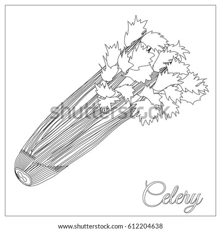 Celery Stalk Experiment Food Coloring Coloring Pages