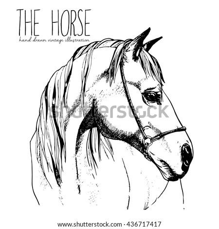 Horse Head Vector Front