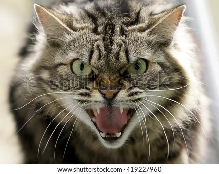 Angry Stock Images Royalty Free Images Amp Vectors