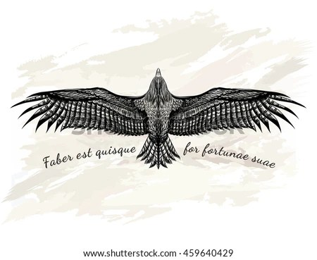 eagle anatomy diagram flow refrigeration cycle bald wing free wiring for you detailed hand drawn tattoo black stock vector