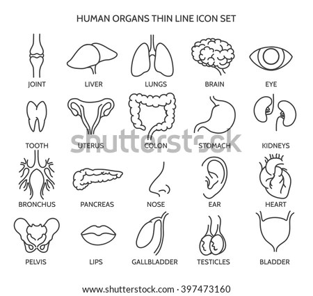 Organ Stock Images, Royalty-Free Images & Vectors
