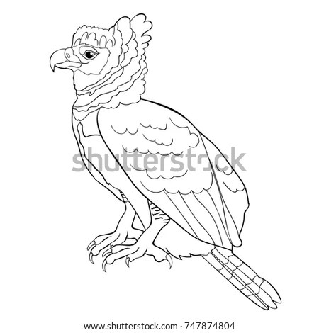 Harpy Stock Images, Royalty-Free Images & Vectors