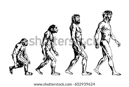 Human Evolution Stock Images, Royalty-Free Images