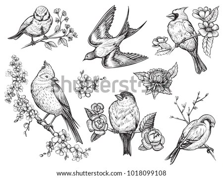 Cardinal Flying Stock Images, Royalty-Free Images