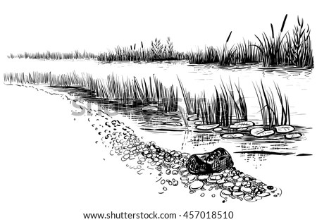Swamp Stock Images, Royalty-Free Images & Vectors