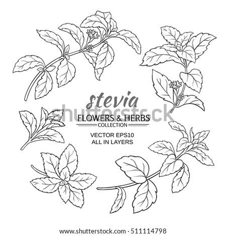 Stevia Stock Images, Royalty-Free Images & Vectors