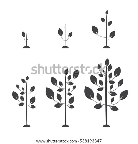 Growing Plant Stock Images, Royalty-Free Images & Vectors