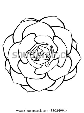 Rose Sketch Black Outline On White Stock Vector 258588338