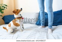 Jump Mattress Stock Images, Royalty-Free Images & Vectors ...