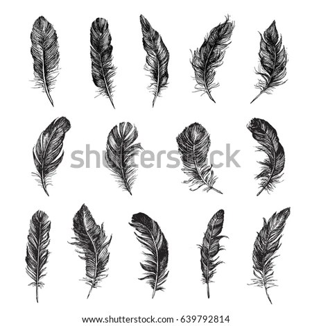 Feathers Stock Images, Royalty-Free Images & Vectors
